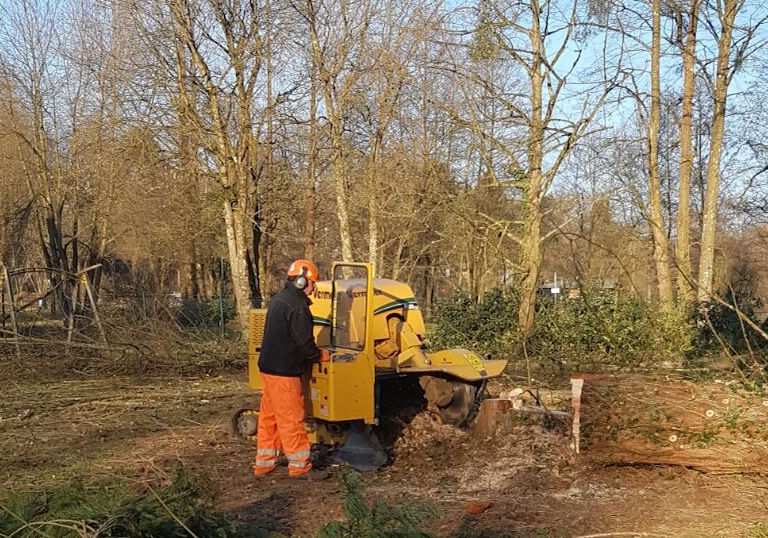 Stump removal in York and Malton