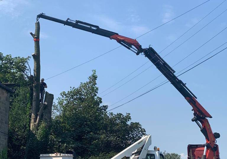 Tree removal with a crane in York and Malton