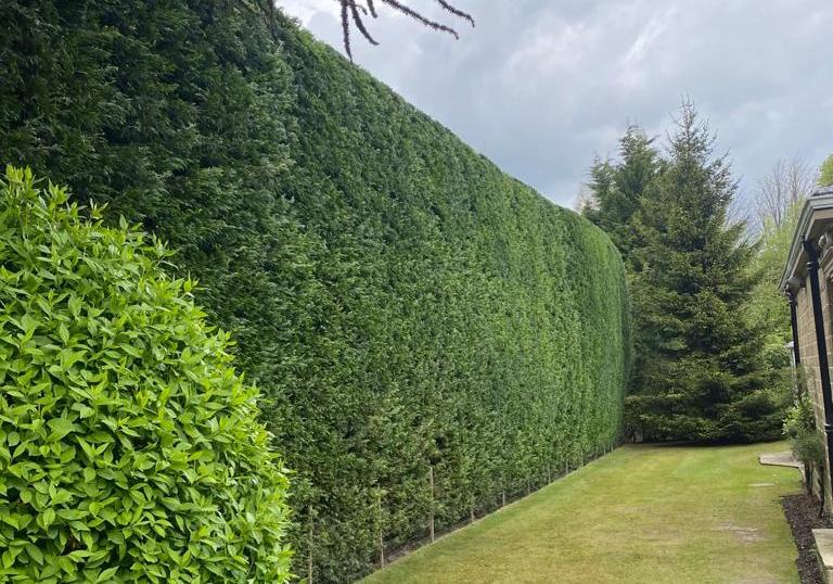 hedge trimming services in malton.