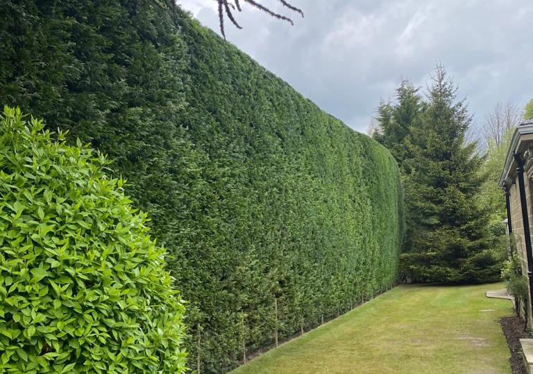 hedge trimming in York.