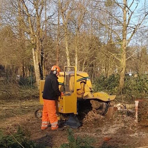 tree surgeon doing stump grinding in yorkshire.