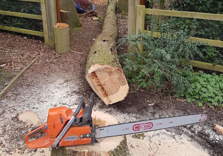 Tree felling services in Malton