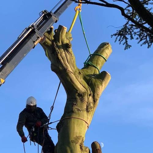 Tree felling in Yorkshire