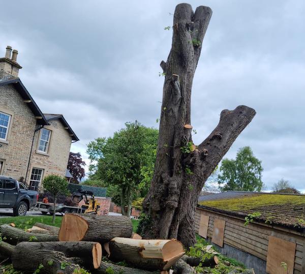 tree removal in malton