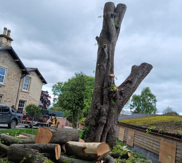 tree removal in york.