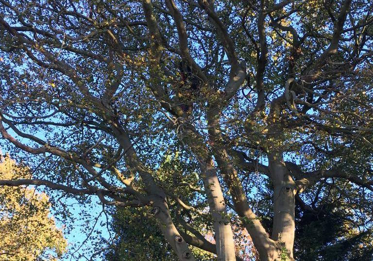 tree surgery services in york.